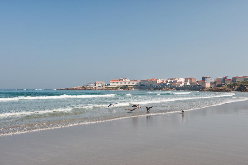 Gaviotas en la playa de As Salseiras